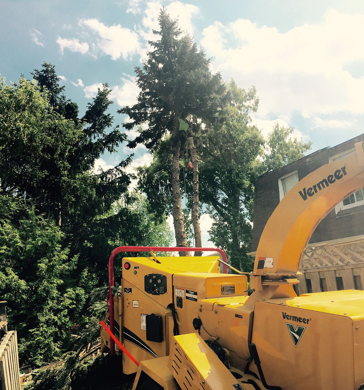 Tree Removal Services GTA